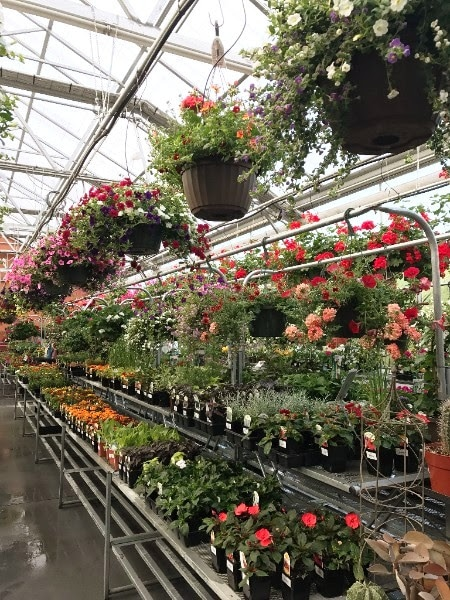 Superb What Says U0027I Love Youu0027 More Than Colorful Perennials That Flower Every  Year? Walk Through The Nursery And Browse Our Wide Selection Of Flowering  Shrubs That ...
